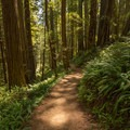 A typical view along this trail.- Miner's Ridge Trail, Prairie Creek to Gold Bluffs Beach