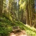 A perfect place to rest in this enchanted forest.- Miner's Ridge Trail, Prairie Creek to Gold Bluffs Beach