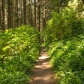 Nearing the beach and the end of the trail.- Miner's Ridge Trail, Prairie Creek to Gold Bluffs Beach