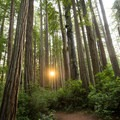 The sun sets between the coastal redwoods. - Miner's Ridge Trail, Prairie Creek to Gold Bluffs Beach