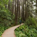 Feeling small along the trail adjacent to Fern Canyon.- James Irvine Trail, Prairie Creek to Fern Canyon