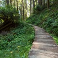 A boardwalk along the trail protects a small stream.- James Irvine Trail, Prairie Creek to Fern Canyon