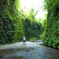 Enjoying the surreal Fern Canyon.- James Irvine Trail, Prairie Creek to Fern Canyon