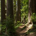 The path is narrow and easy to follow.- James Irvine Trail, Prairie Creek to Fern Canyon