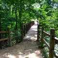 Forest trail at Mount Vernon. - George Washington's Mount Vernon
