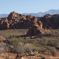 Red Cliffs Desert Reserve.- Chuckwalla Trail to Scout Cave