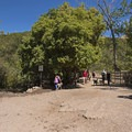 At the bottom of the hill is the first watering hole and the first off-leash area.- Tanner Dog Park