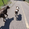 Walking the dogs in Tanner Dog Park.- Tanner Dog Park