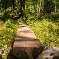 A short boardwalk over swampy terrain.- North Point