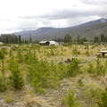 The campground was logged to remove dead timber killed by bark beetle.- Timber Creek Campground