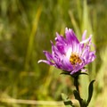 Unidentified species (help us identify it by providing feedback).- Little Yellowstone via the La Poudre Pass Trail