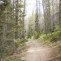 The trail to Little Yellowstone ambles through forests of Douglas fir.- Little Yellowstone via the La Poudre Pass Trail