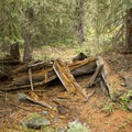 Decaying remains of a cabin along the trail to Little Yellowstone.- Little Yellowstone via the La Poudre Pass Trail