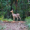 Keep an eye out for wildlife!- Vickery Creek