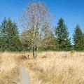 The Ridgeline Trail near the summit of Mount Baldy. - Ridgeline Trail System: Dillard East Trailhead