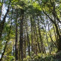 Sun shining through the trees along the Ridgeline Trail.- Ridgeline Trail System: Dillard East Trailhead
