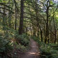 The Ridgeline Trial is popular with hikers and mountain bikers.- Ridgeline Trail System: Dillard East Trailhead