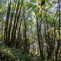 The Ridgeline Trail near the Spring Boulevard Trailhead. - Ridgeline Trail System: Dillard East Trailhead