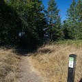 The trail junction where you can turn back to the Dillard East Trailhead or continue on to the Spring Boulevard Trailhead.- Ridgeline Trail System: Dillard East Trailhead