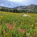 Wildflowers bloom earlier in the season.- Albion Meadows Trail to Germania Pass