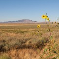 Antelope Island and Frary Peak from the causeway.- Frary Peak