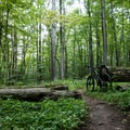 Lush forest surrounds the trails in the Trout Brook Valley Preserve.- Trout Brook Valley Preserve Mountain Biking