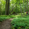 Trails range from easy to slightly technical in Trout Brook Valley Preserve.- Trout Brook Valley Preserve Mountain Biking