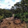 Watch your step on the slippery mud!- Alaka'i Swamp via Pihea Trail