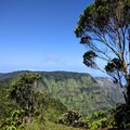 There's a nice view from the top of Pihea Lookout.- Alaka'i Swamp via Pihea Trail