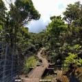 Much of the trail follows a dilapidated boardwalk.- Alaka'i Swamp via Pihea Trail