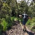 You'll test your balance on some of the mud crossings.- Alaka'i Swamp via Pihea Trail