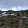 Once you reach the high alpine bogs, stop to take it all in. - Alaka'i Swamp via Pihea Trail