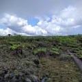 The Alaka'i Swamp is a unique place.- Alaka'i Swamp via Pihea Trail