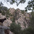 Dogs are allowed on the Heughs Canyon Trail.- Heughs Canyon Trail