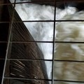 Rushing water illustrates the power of the mill.- Thompson's Mills State Heritage Site
