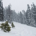 The skin track crossing the bottom of the first clearing.- Gunsight Ridge Backcountry Ski via Pocket Creek