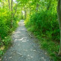 The crushed gravel path to the lighthouse. - Saugerties Lighthouse