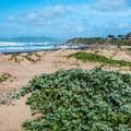 Morro Strand Beach.- Morro Strand State Beach