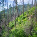 Hiking through the burn zone on the way to Shissler Peak.- Shissler Peak Fire Tower