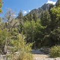 The Little Cottonwood Trail.- Little Cottonwood Trail
