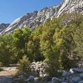 Little Cottonwood Canyon.- Little Cottonwood Trail