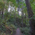 Trail leading through the forest on the Ridgeline Trail System.- Ridgeline Trail System: Blanton Trailhead