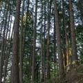 Sun shining through the trees on the Ridgeline Trail System.- Ridgeline Trail System: Blanton Trailhead