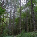 Ridgeline Trail System on the south end of Eugene.- Ridgeline Trail System: Blanton Trailhead