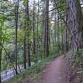 Ridgeline Trail near Willamette Street in Eugene.- Ridgeline Trail System: Blanton Trailhead