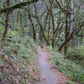 Even deer seem to enjoy the Ridgeline Trail. - Ridgeline Trail System: Blanton Trailhead