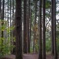 Sun shining through the trees along the Ridgeline Trail.- Ridgeline Trail System: Blanton Trailhead