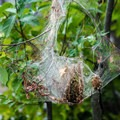 Funnel Webs can be found all along the trail.- House Mountain Loop