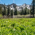 Meadow by Tamarack Lake.- Tamrack Lakes Hike