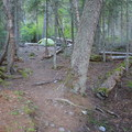 Typical site at Head of Bowman Lake Campground.- Head of Bowman Lake Campground